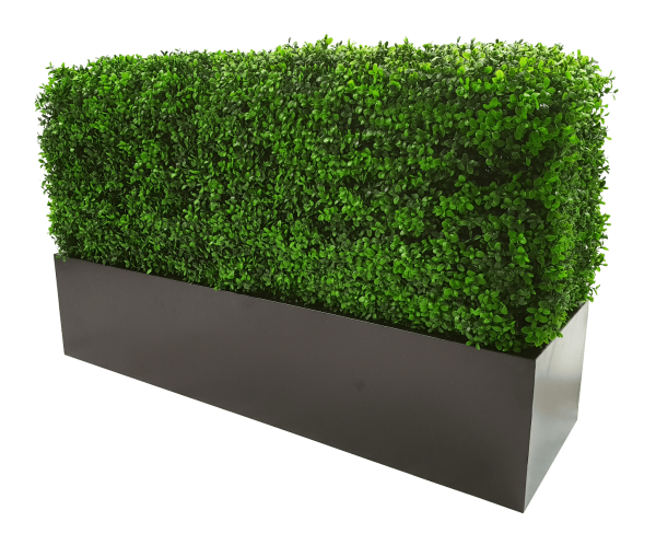 buxus_hedge_1.png