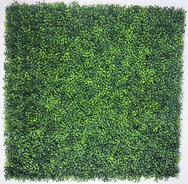 mixed_boxwood_screen_1_.jpg