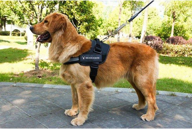 adjustable-dog-harness-vest-chest-walk-out-380723_cvcarbb6briv03bt.jpg