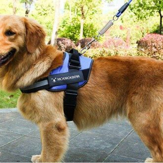adjustable-dog-harness-vest-chest-walk-out-608226_ncuosi8akwsowm9b.jpg